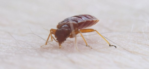 tips to preventing bed bugs